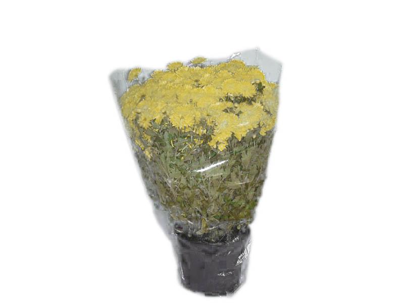 Verpackungstrichter Für Chrysanthemen, PE 40 My, Unten Zu, Im Beutel Gelocht
